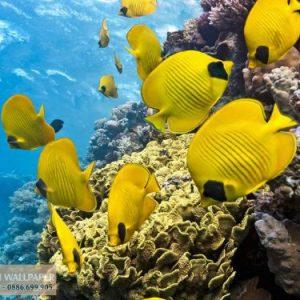 tranh dán tường đàn cá vàng
