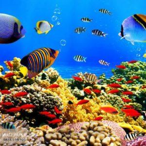 giấy dán tường 3d phong cảnh biển ngọc linh