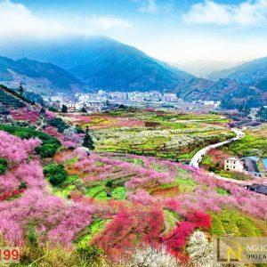 tranh giấy dán tường 3d vườn hoa mùa xuân ở Quảng Đông