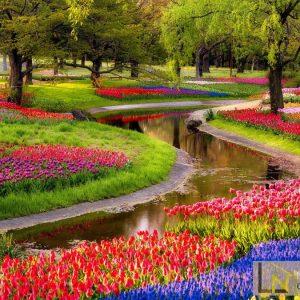 tranh giấy dán tường 3d vườn hoa tulip