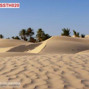 tranh dán tường sa mạc sahara