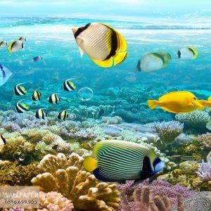 Tranh 3d phong cảnh biển đại dương bao la