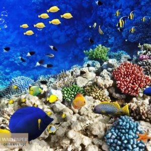 Tranh 3d phong cảnh biển đàn cá muôn màu sắc