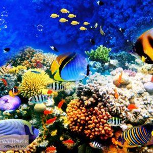 Tranh 3d phong cảnh biển đàn cá rực rỡ