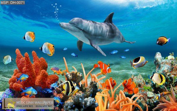 Tranh 3d san hô và cá heo