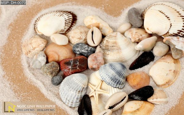 Tranh 3d phong cảnh biển hình trái tim ốc biển