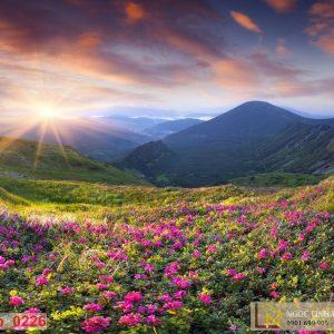 Tranh 3d vườn hoa trên đồi núi