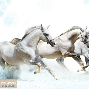 Tranh dán tường 3d động vật 3 con ngựa trắng