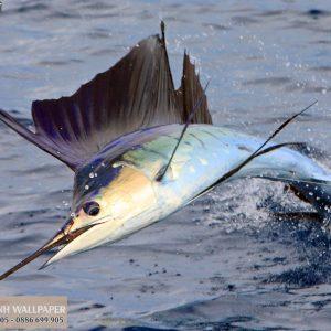 Tranh dán tường 3d động vật cá kiếm