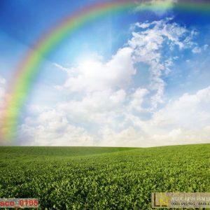 tranh thiên nhiên đồng cỏ và cầu vòng