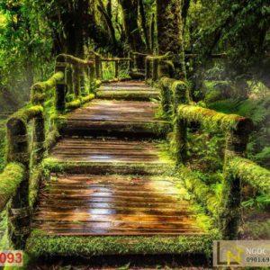Tranh 3d dán tường thiên nhiên cầu bậc thang đầy rêu