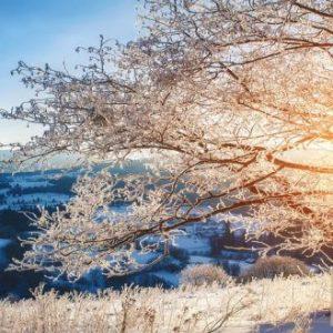Tranh 3d thiên nhiên cây tuyết chiều tà