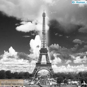 Tranh 3d trắng đen tháp eiffel