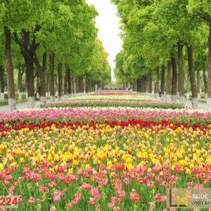 Tranh 3d dán tường vườn hoa hồng